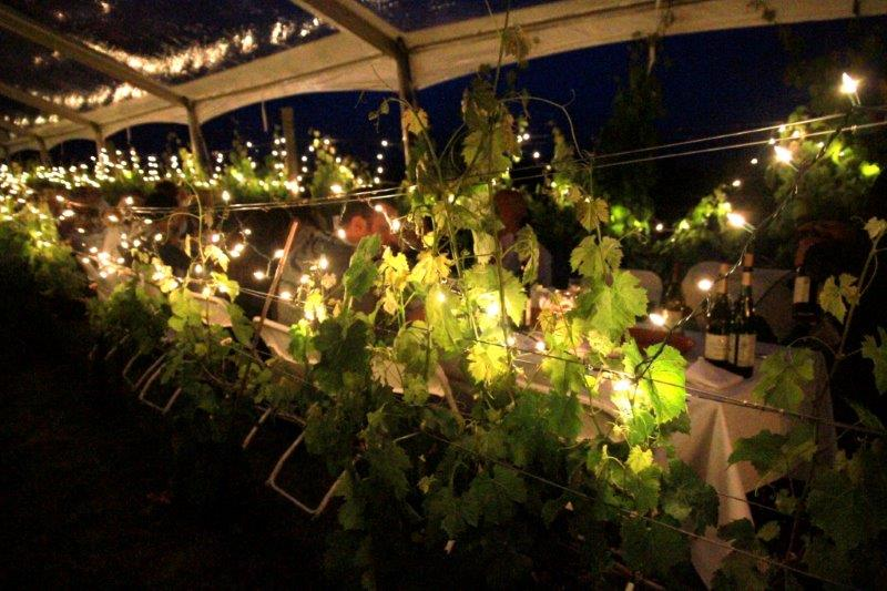 lighted vineyard dinner